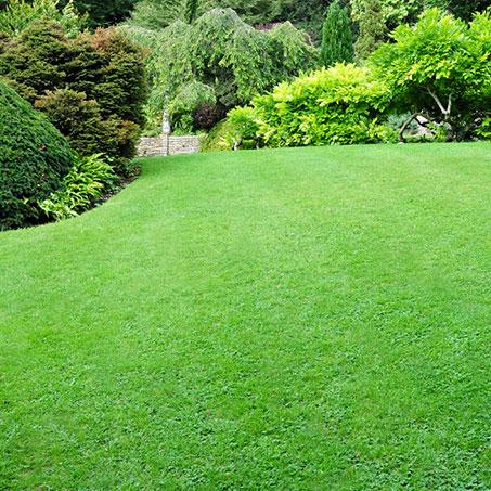 service-grid-lawn-care