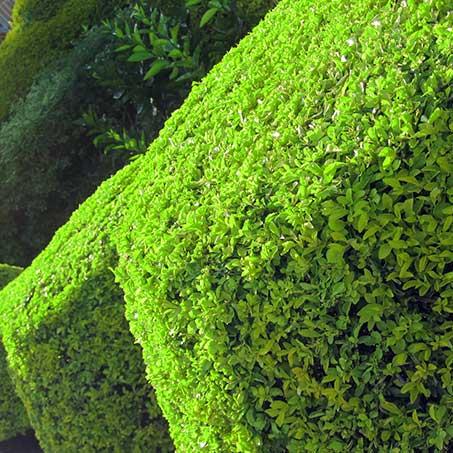 service-grid-tree-bush